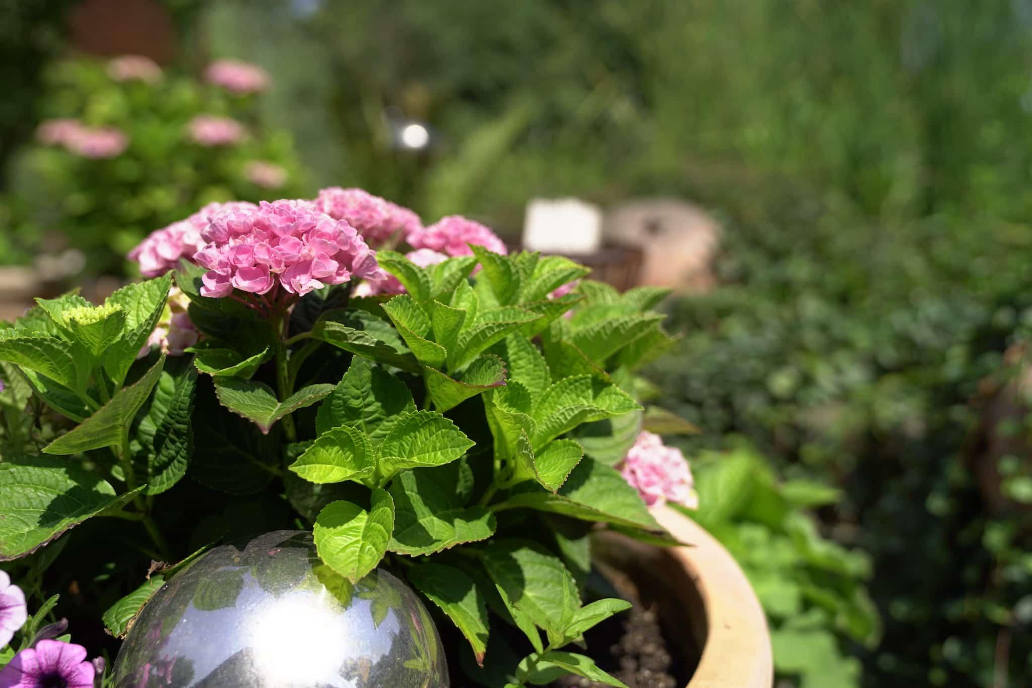 Blume und Deko im Topf