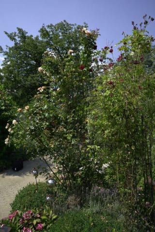 Bäume und Sträucher neben gepflastertem Weg