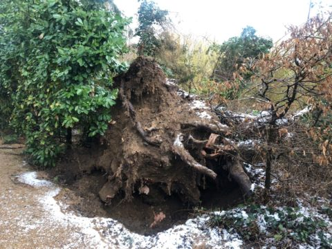 Wurzel des Baumes nach Ausriss zu sehen