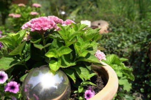 Bepflanzter Topf mit Dekokugel