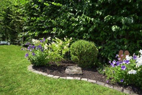 Blumen und kleine Büsche im Beet für den Garten.