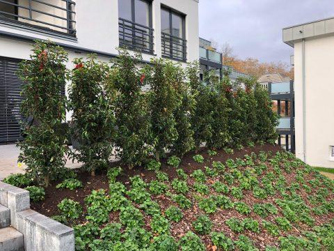 Hangbefestigung mit Pflanzen